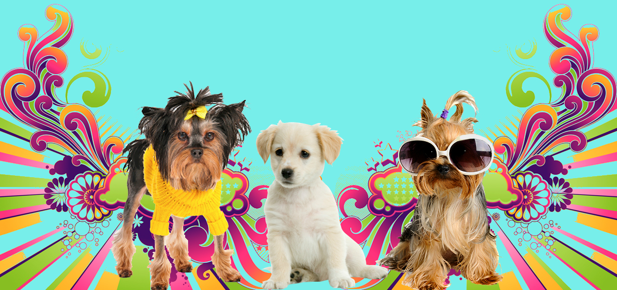 Torrance, CA Best Groomers & Best Dog Spa